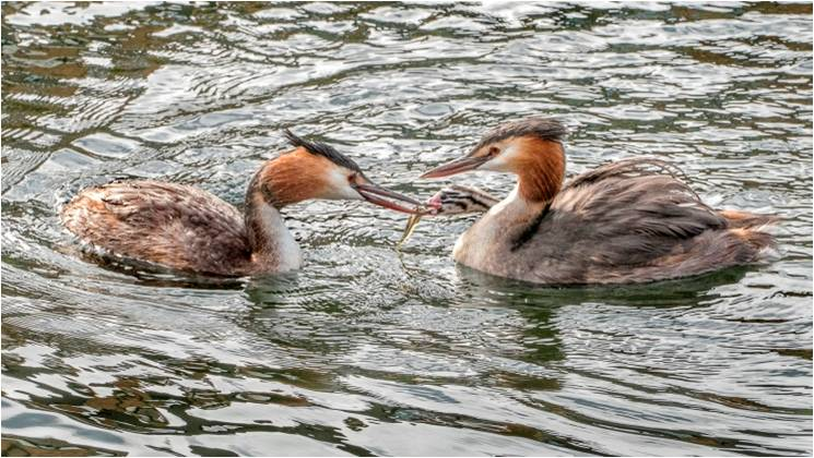 Wildlife Photography Competition 2018 – The Winners – Canary Wharf